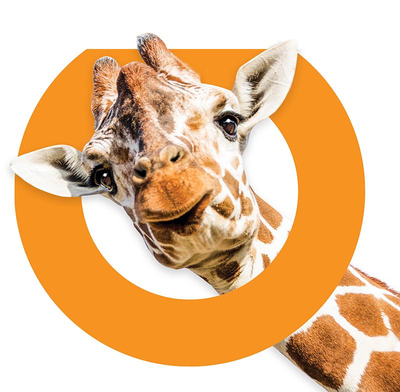 home-giraffe